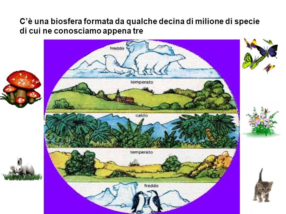 C'è una biosfera formata da qualche decina di milione di specie di cui ne conosciamo appena tre