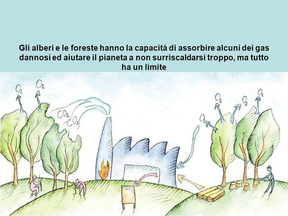Gli alberi e le foreste hanno la capacità di assorbire alcuni dei gas dannosi ed aiutare il pianeta a non surriscaldarsi troppo, ma tutto ha un limite
