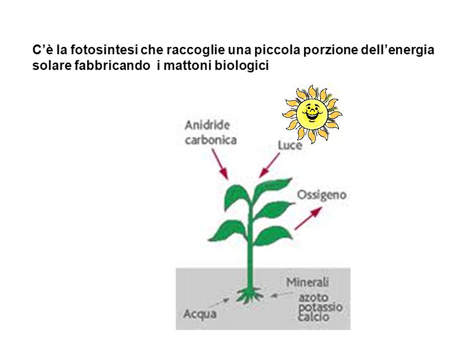 C'è la fotosintesi che raccoglie una piccola porzione dell'energia solare fabbricando i mattoni biologici