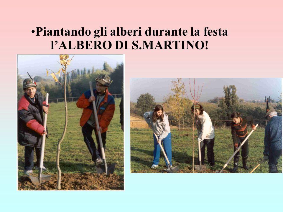 Piantando gli alberi durante la festa l'ALBERO DI S.MARTINO!
