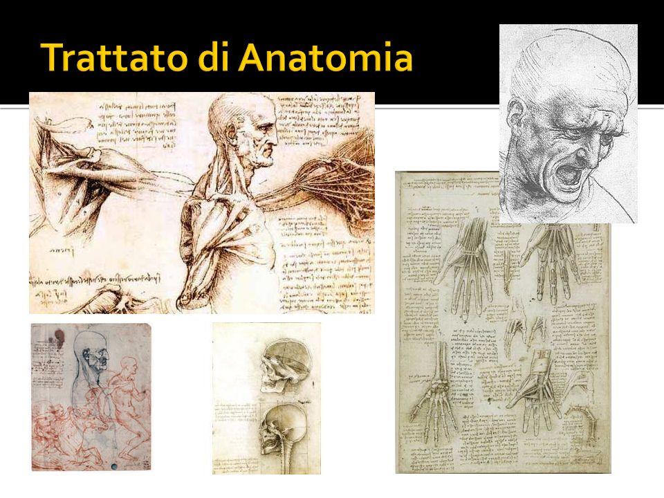 Trattato di Anatomia