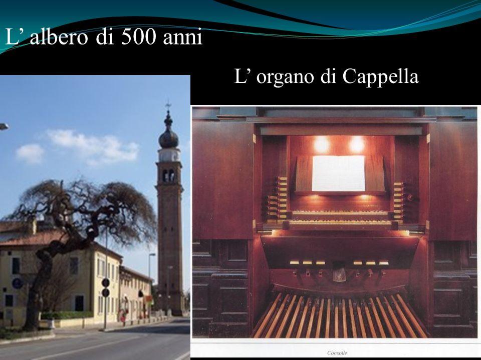 L' albero di 500 anni L' organo di Cappella