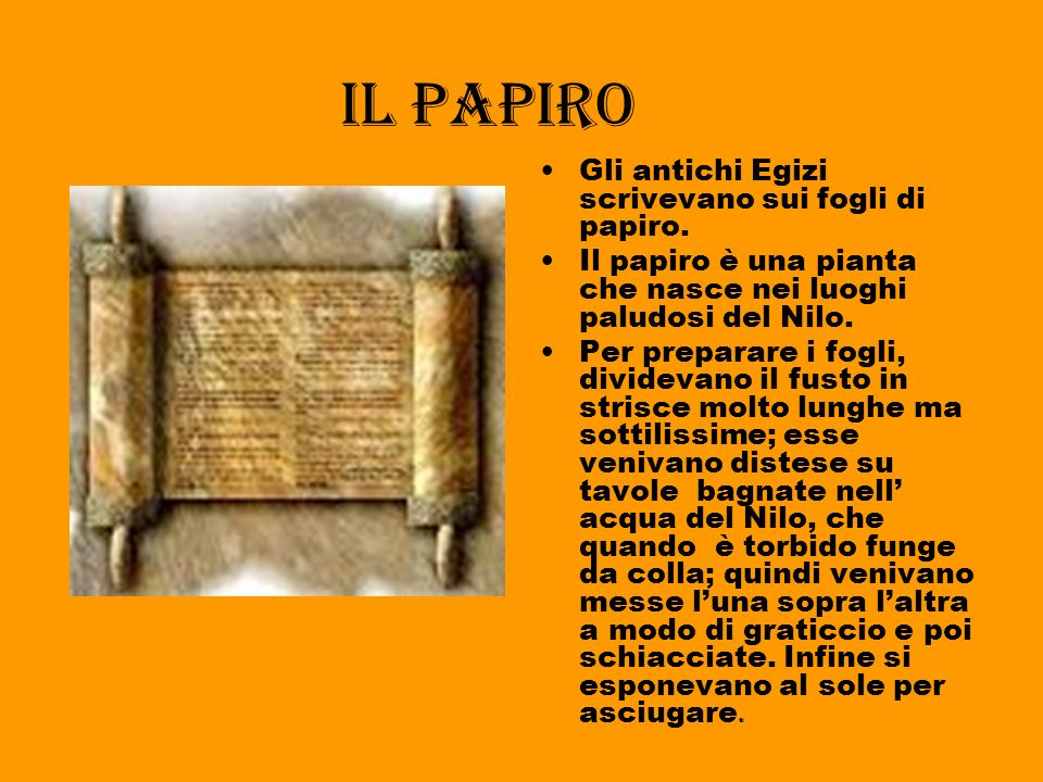 Il papiro Gli antichi Egizi scrivevano sui fogli di papiro.
