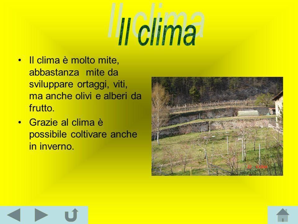 Il clima Il clima è molto mite, abbastanza mite da sviluppare ortaggi, viti, ma anche olivi e alberi da frutto.