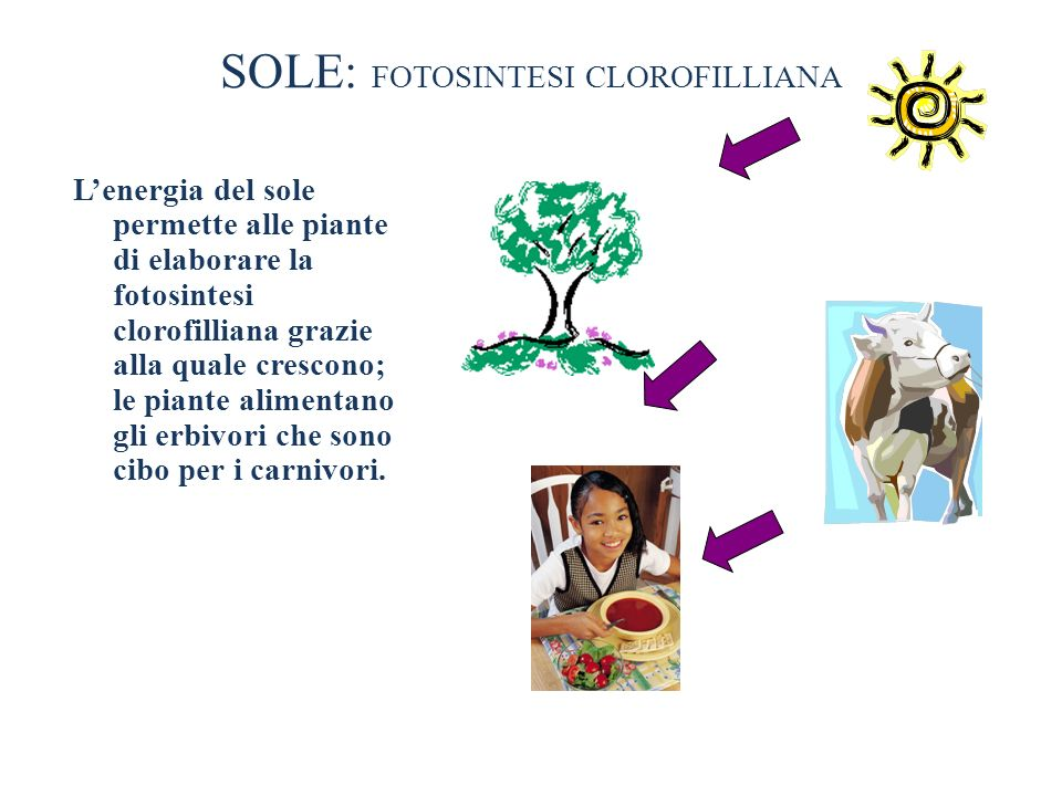 SOLE: FOTOSINTESI CLOROFILLIANA