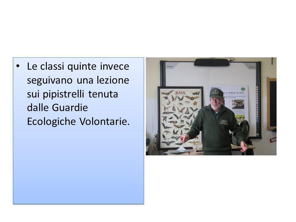 Le classi quinte invece seguivano una lezione sui pipistrelli tenuta dalle Guardie Ecologiche Volontarie.