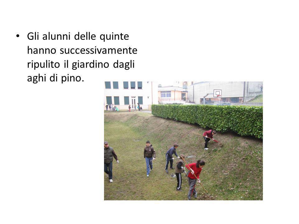 Gli alunni delle quinte hanno successivamente ripulito il giardino dagli aghi di pino.