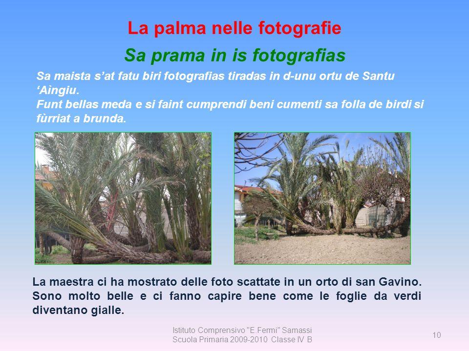 La palma nelle fotografie Sa prama in is fotografias