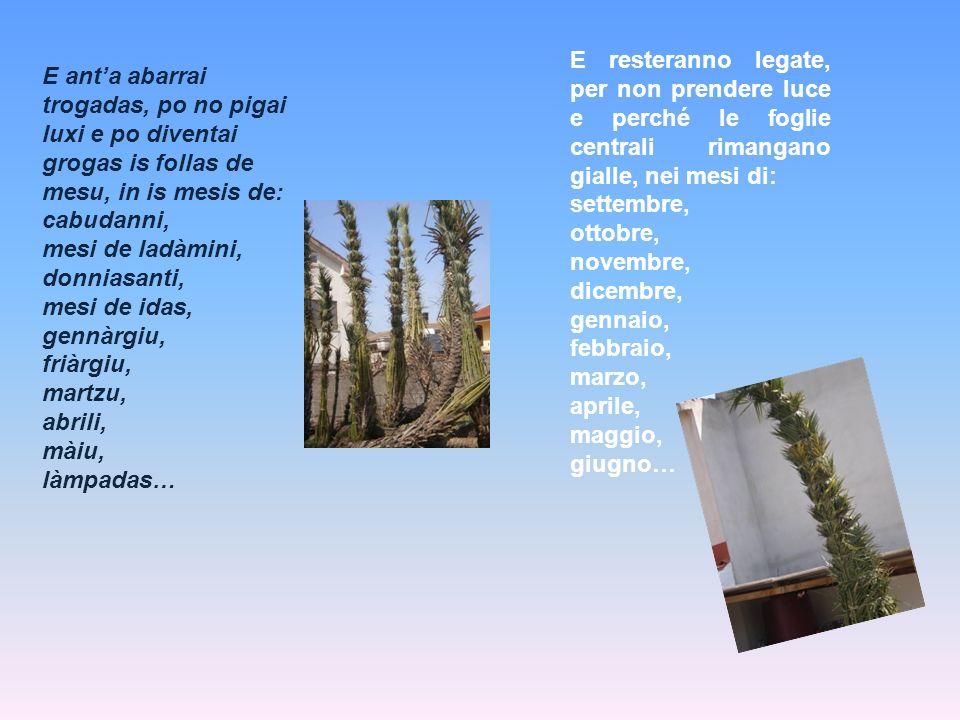 E resteranno legate, per non prendere luce e perché le foglie centrali rimangano gialle, nei mesi di:
