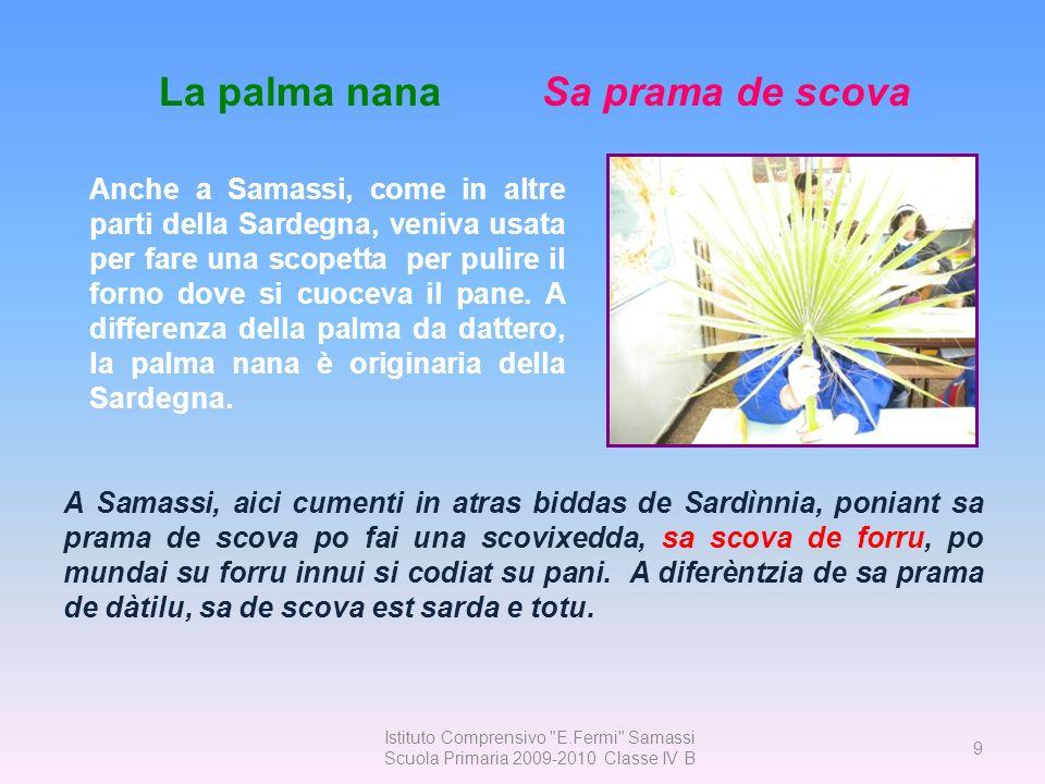 La palma nana Sa prama de scova