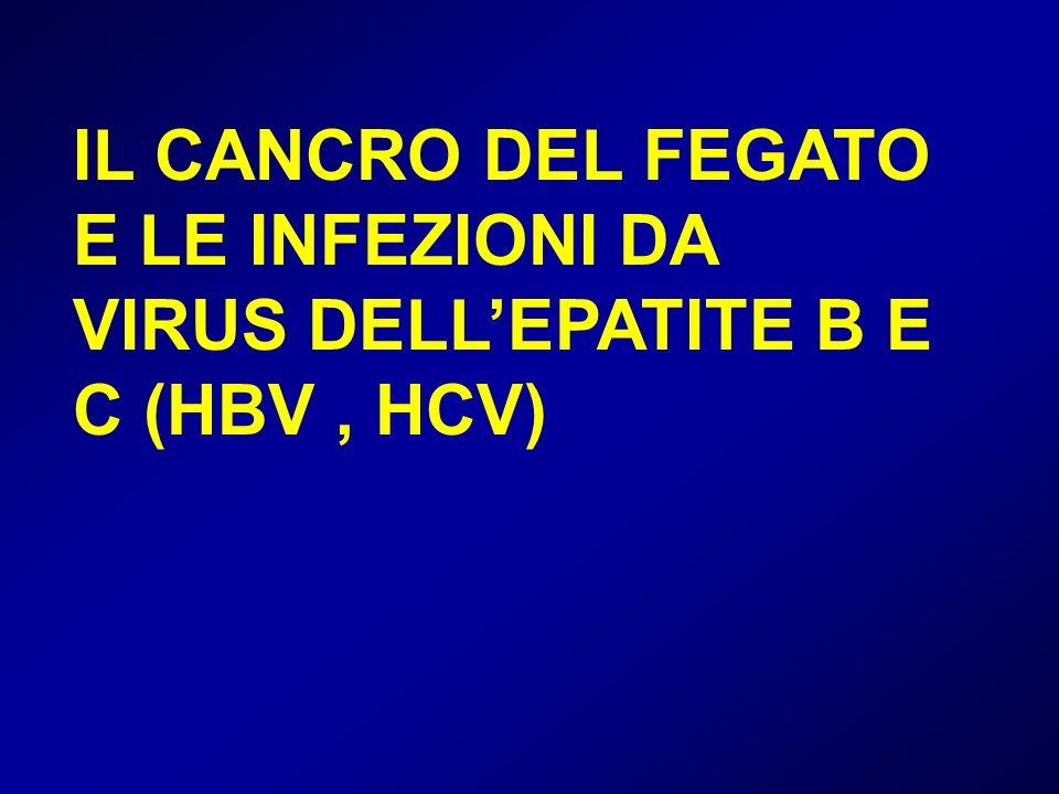 IL CANCRO DEL FEGATO E LE INFEZIONI DA VIRUS DELL'EPATITE B E C (HBV , HCV)