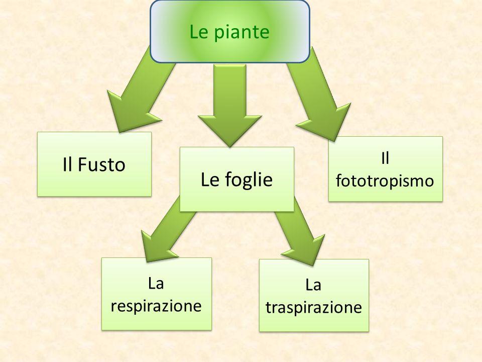Le piante Il Fusto Le foglie Il fototropismo La respirazione