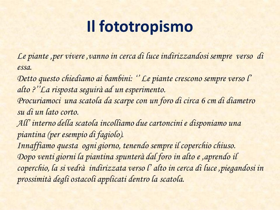 Il fototropismo