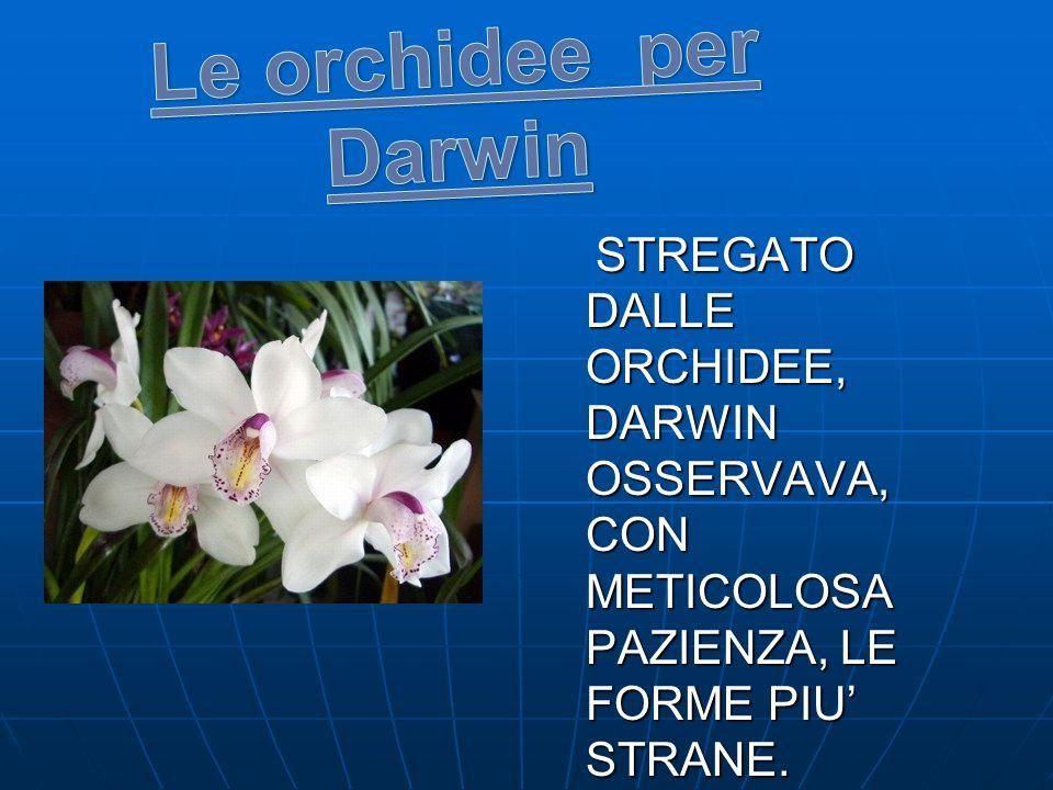 Le orchidee per Darwin STREGATO DALLE ORCHIDEE, DARWIN OSSERVAVA, CON METICOLOSA PAZIENZA, LE FORME PIU' STRANE.
