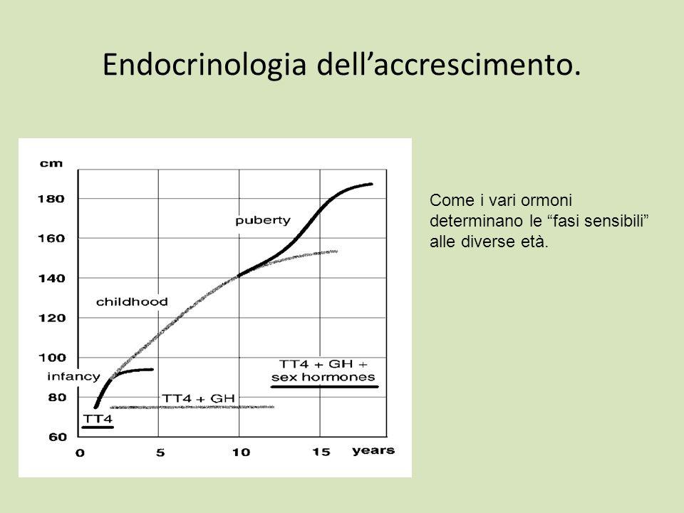 Endocrinologia dell'accrescimento.