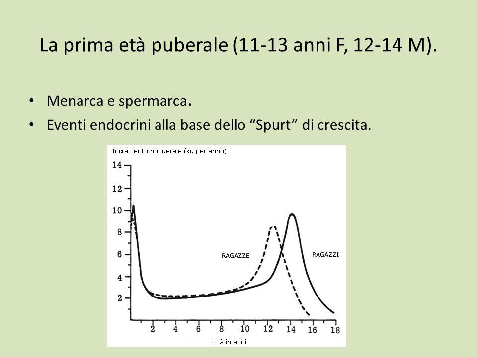 La prima età puberale (11-13 anni F, 12-14 M).