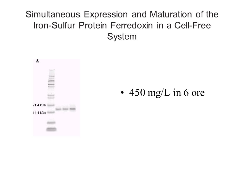 Simultaneous Expression and Maturation of the Iron-Sulfur Protein Ferredoxin in a Cell-Free System