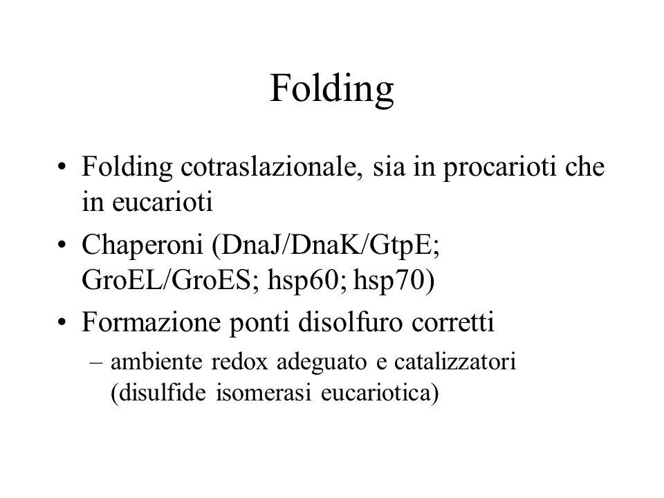 Folding Folding cotraslazionale, sia in procarioti che in eucarioti