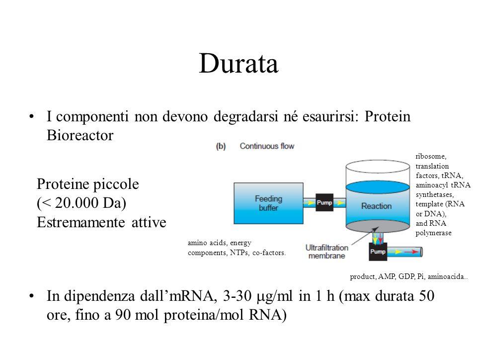 Durata I componenti non devono degradarsi né esaurirsi: Protein Bioreactor.