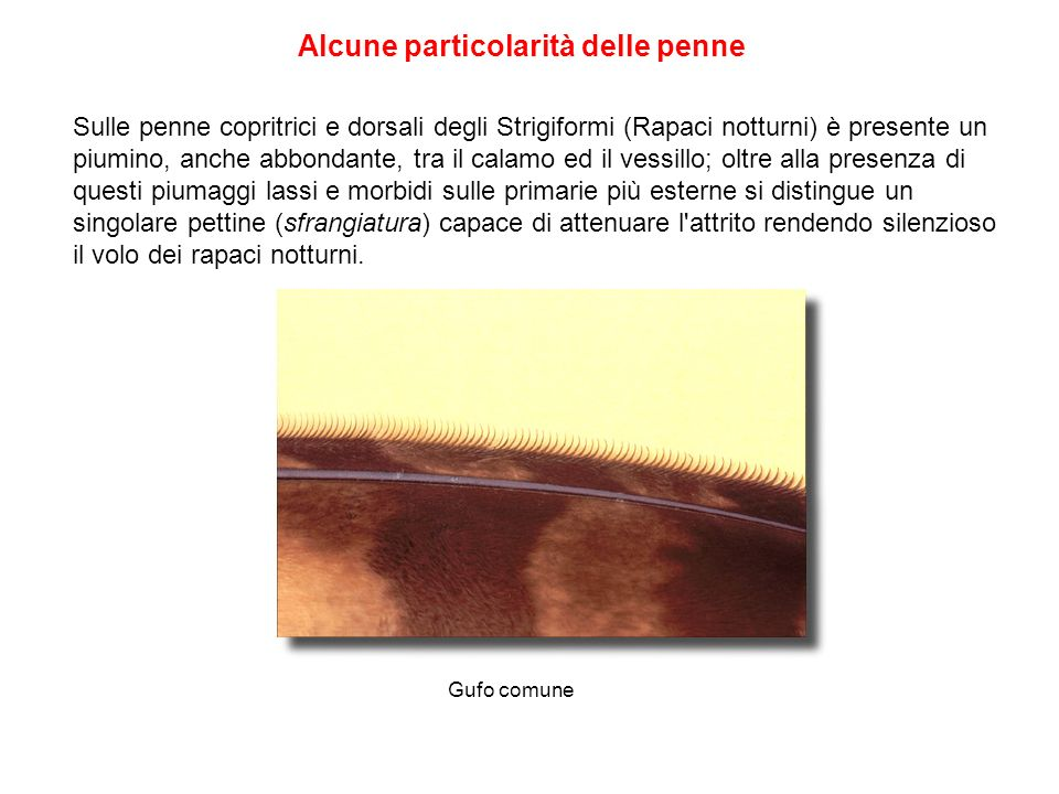 Alcune particolarità delle penne