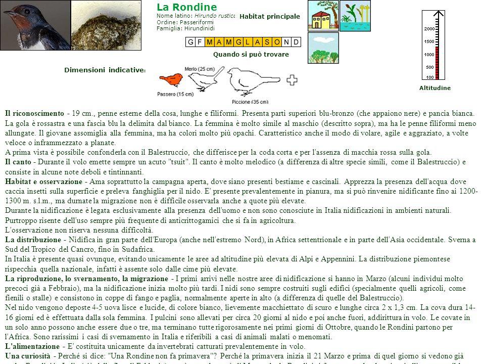 La RondineNome latino: Hirundo rustica Ordine: Passeriformi Famiglia: Hirundinidi. Habitat principale.