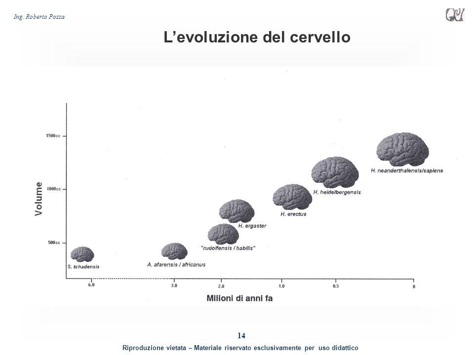 L'evoluzione del cervello