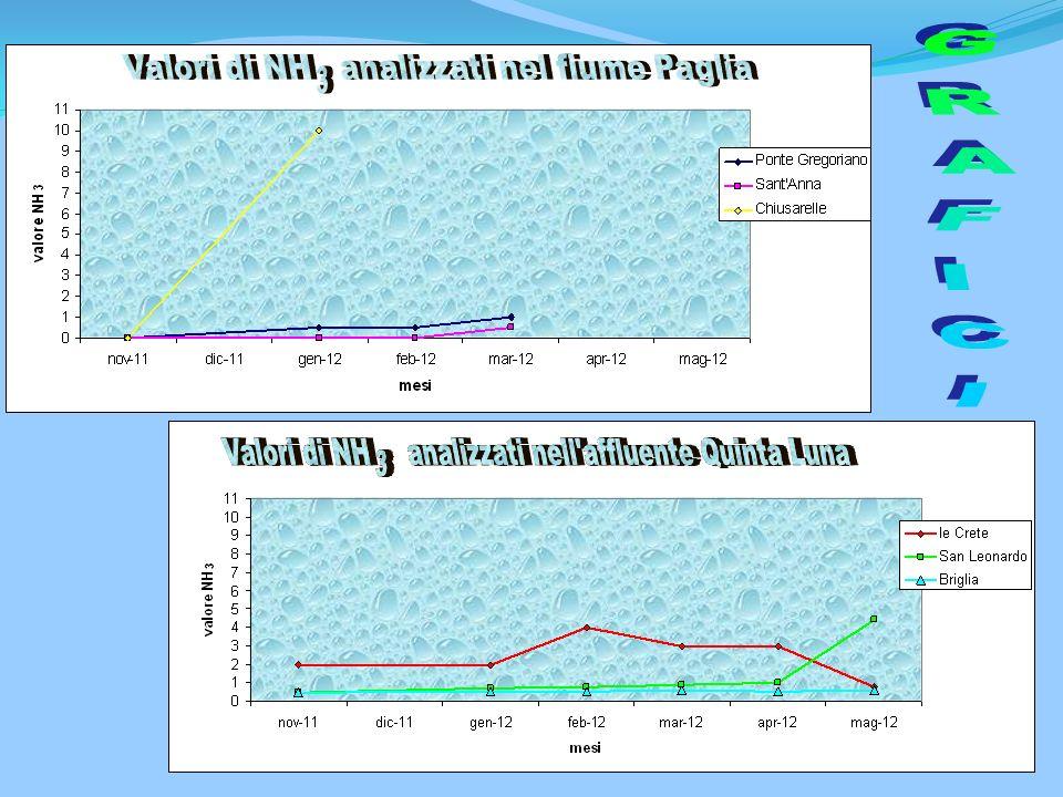 Valori di NH analizzati nel fiume Paglia
