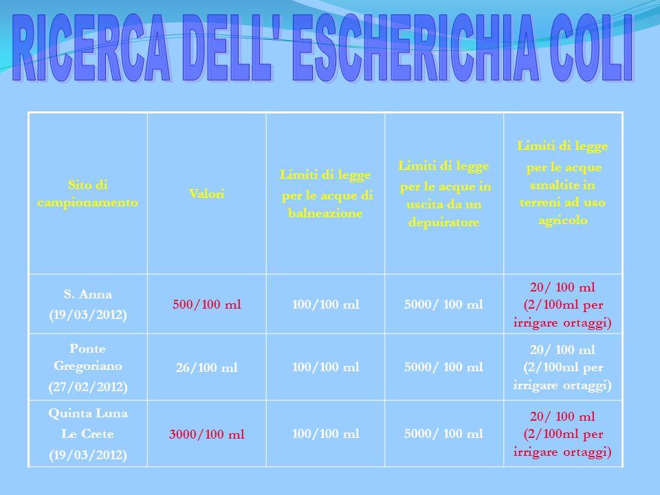 RICERCA DELL ESCHERICHIA COLI