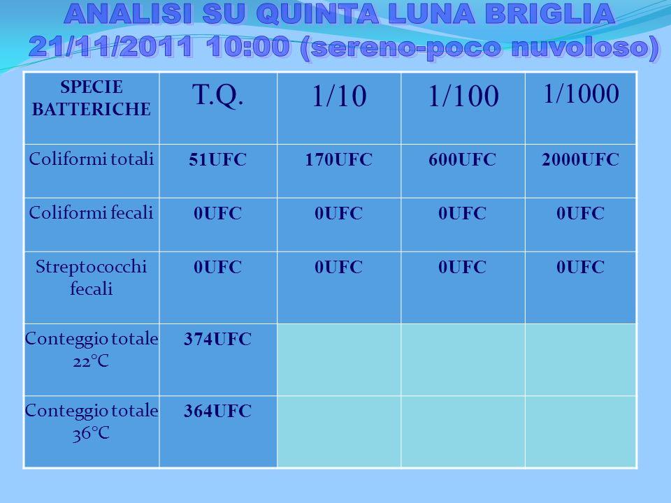 ANALISI SU QUINTA LUNA BRIGLIA 21/11/2011 10:00 (sereno-poco nuvoloso)