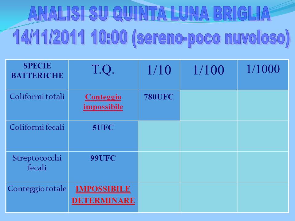ANALISI SU QUINTA LUNA BRIGLIA 14/11/2011 10:00 (sereno-poco nuvoloso)