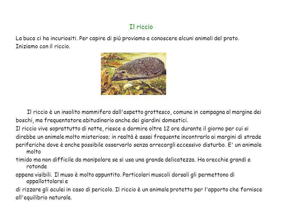 Il riccioLa buca ci ha incuriositi. Per capire di più proviamo a conoscere alcuni animali del prato.