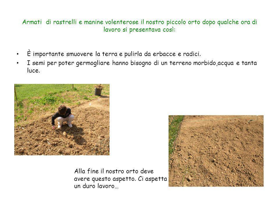Armati di rastrelli e manine volenterose il nostro piccolo orto dopo qualche ora di lavoro si presentava così: