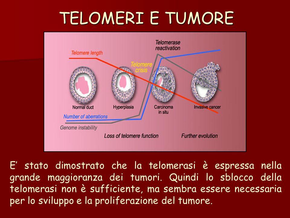 TELOMERI E TUMORE