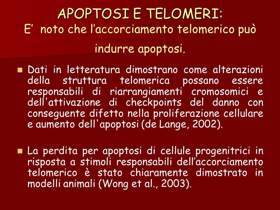 APOPTOSI E TELOMERI: E' noto che l'accorciamento telomerico può indurre apoptosi.