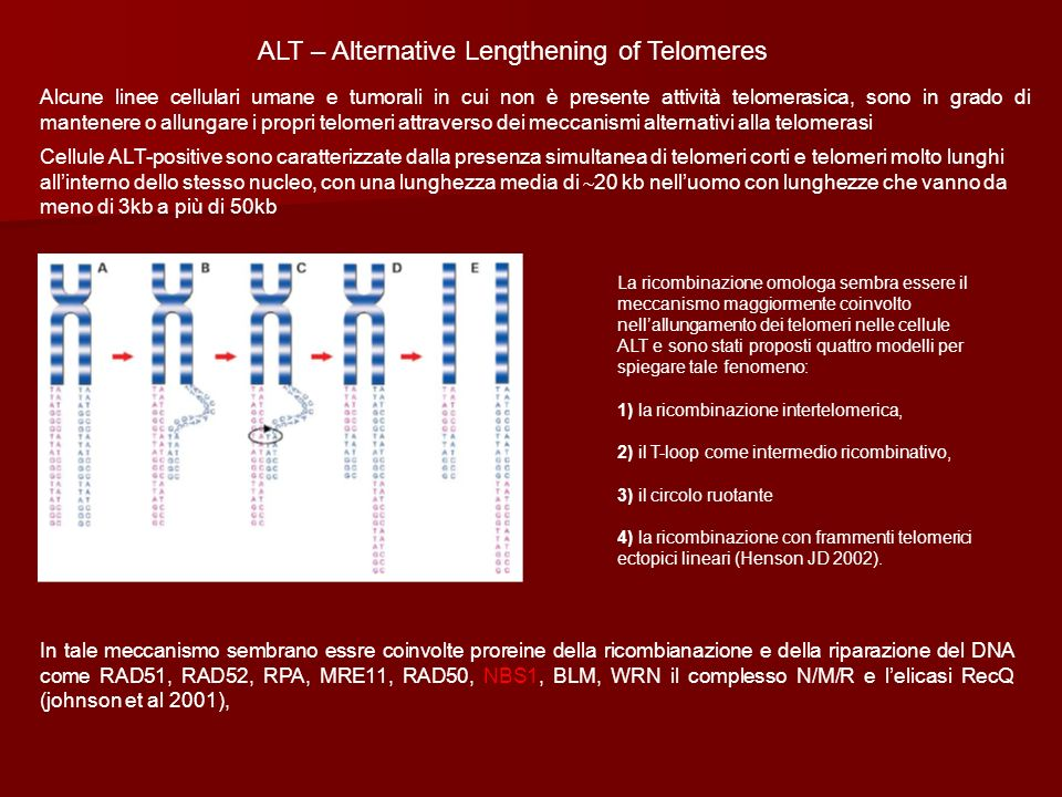 ALT – Alternative Lengthening of Telomeres