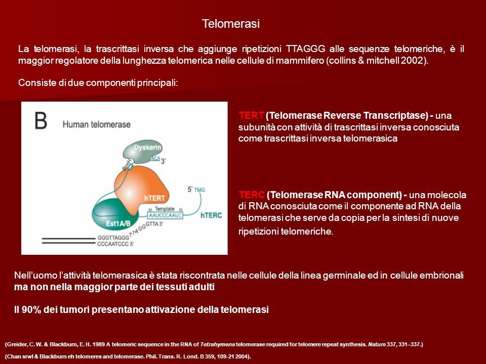 Telomerasi