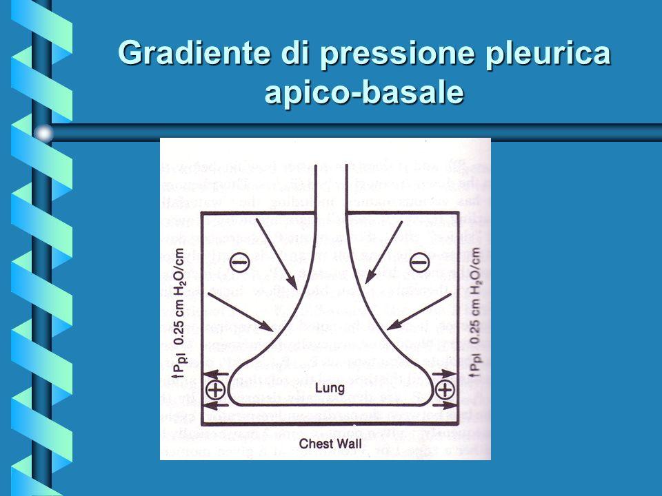 Gradiente di pressione pleurica apico-basale