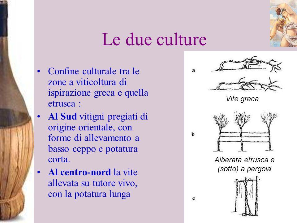 Alberata etrusca e (sotto) a pergola