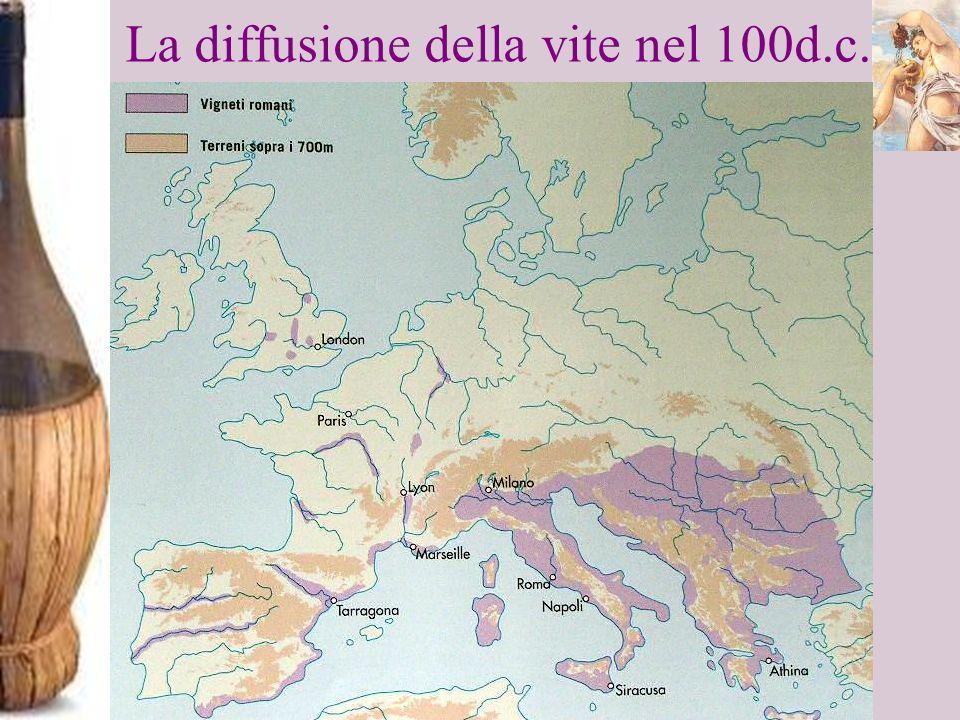 La diffusione della vite nel 100d.c.
