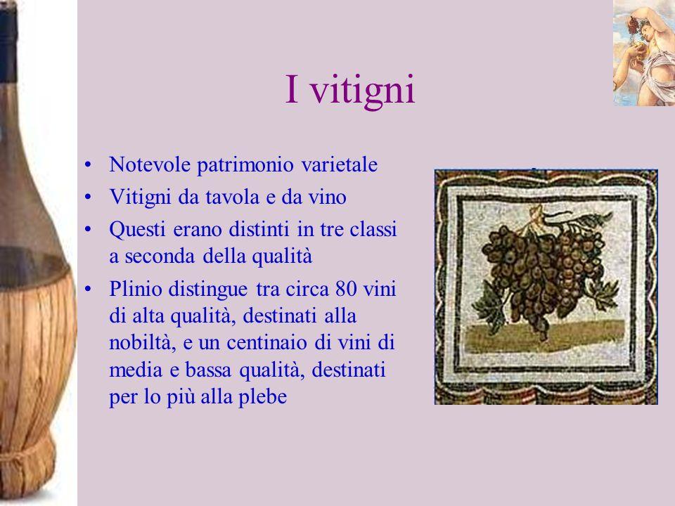 I vitigni Notevole patrimonio varietale Vitigni da tavola e da vino