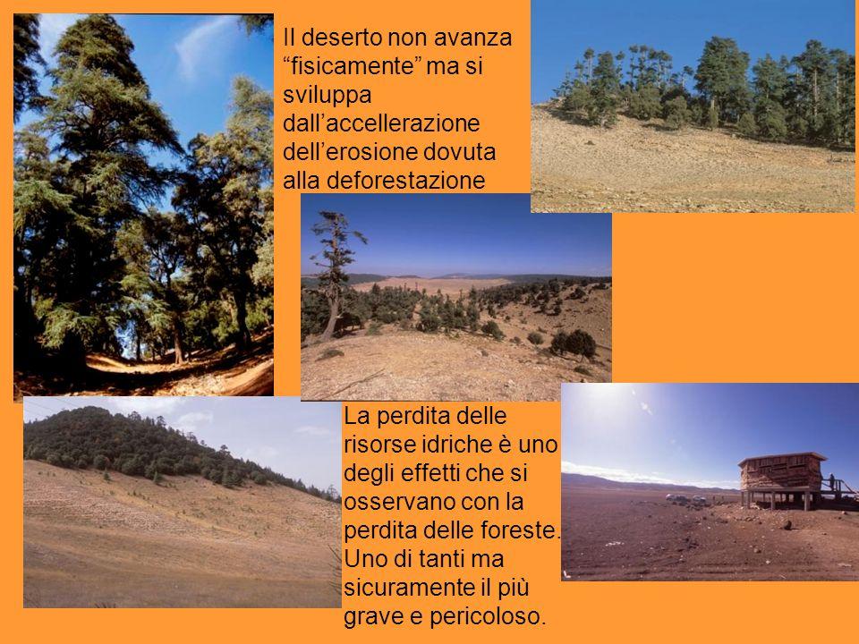 Il deserto non avanza fisicamente ma si sviluppa dall'accellerazione dell'erosione dovuta alla deforestazione