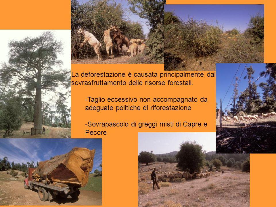 La deforestazione è causata principalmente dal sovrasfruttamento delle risorse forestali.
