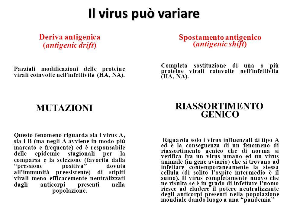 Spostamento antigenico (antigenic shift) RIASSORTIMENTO GENICO