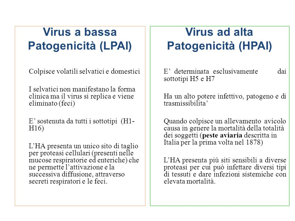 Virus a bassa Patogenicità (LPAI) Virus ad alta Patogenicità (HPAI)