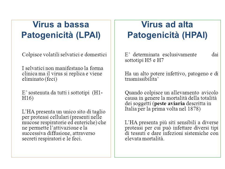 Virus a bassa Patogenicità (LPAI) Virus ad alta Patogenicità (HPAI)