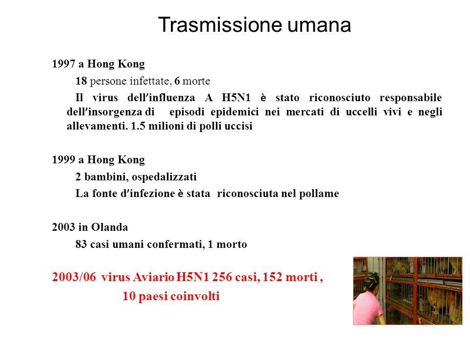 Trasmissione umana 2003/06 virus Aviario H5N1 256 casi, 152 morti ,