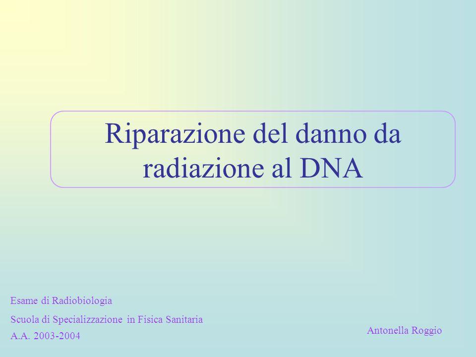 Riparazione del danno da radiazione al DNA