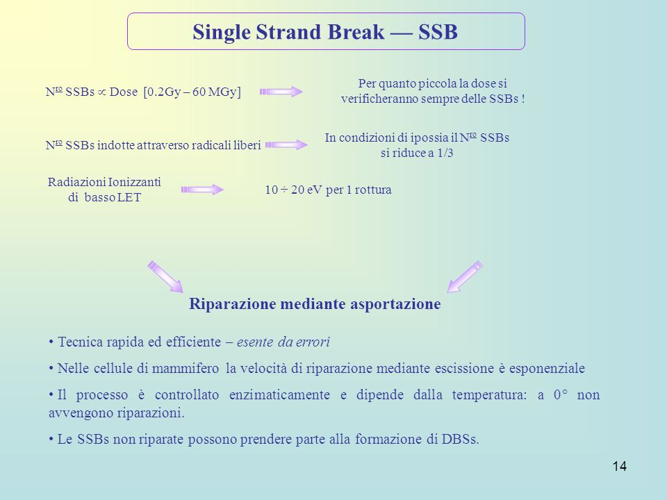 Single Strand Break — SSB Riparazione mediante asportazione