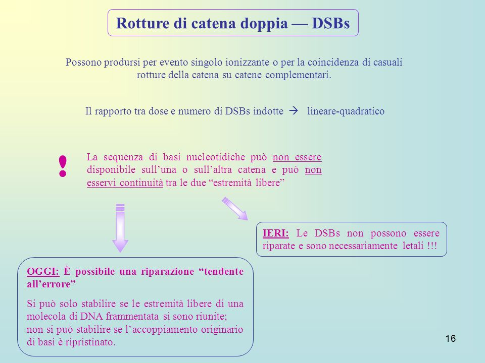 Rotture di catena doppia — DSBs