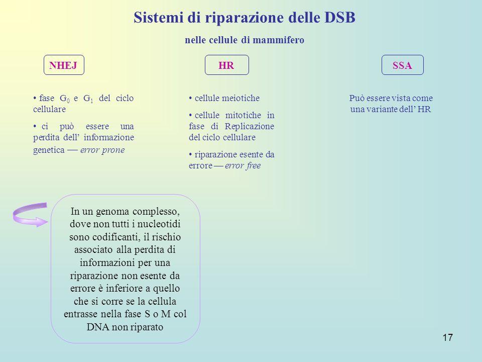 Sistemi di riparazione delle DSB nelle cellule di mammifero